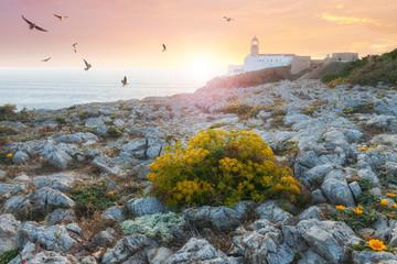 Foto auf AluDibond Leuchtturm Lighthouse at colorful sunset
