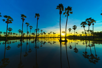 Silhouette of Twin Sugar Palm Tree with Sunrise. Reflection on the water.
