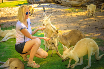Encounter with a group of kangaroos. Happy blonde woman feeds Kangaroo and his joey at a park. Female tourist enjoys Australian animals icon of the country. Whiteman, near Perth, Western Australia.