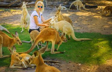 Young caucasian woman feeds Kangaroos at a park. Whiteman, near Perth, Western Australia. Female tourist enjoys Australian animals icon of the country.