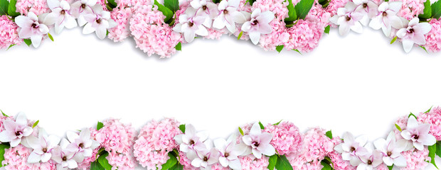 Magnolia and hortensia isolated on white background