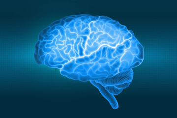 Human brain is a side view in X-rays. Parts of the brain. 3d illustration in blue light on a dark background
