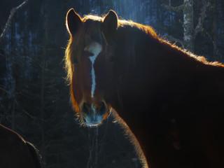 curious dark horse Peeps
