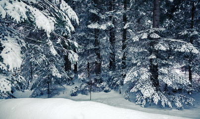 foresta con neve fresca