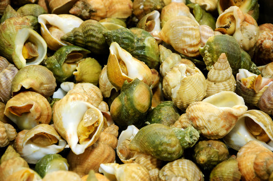 Cooked whelks background