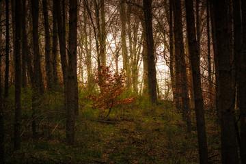 junge buche im unterholz