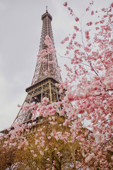 Poster Eiffel Tower Beautiful cherry blossom tree and the Eiffel Tower