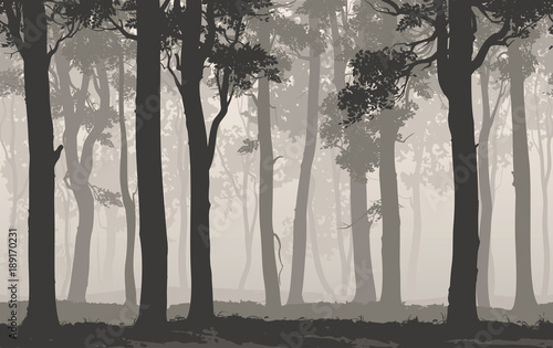 Wall mural Seamless background horizontal. Silhouette of the deciduous forest, vector illustration