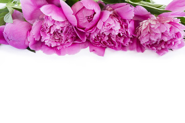 Pink peonies at border of image with copy space for text. Top view. Peonnies on a white background.
