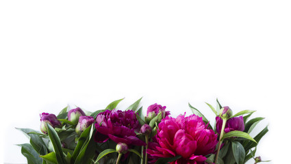 Red peonies at border of image with copy space for text. Top view. Peonnies on a white background. Wall mural