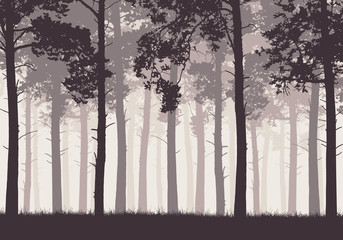 Pine forest with tree trunks and branches