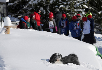 Dog enjoys the snow in front of competitors and official at the African Wintersports Cup in Kleinarl