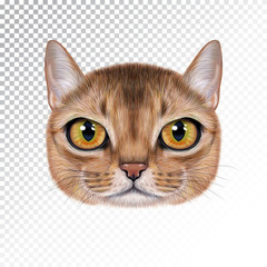 Vector illustration portrait of Abyssinian cat.