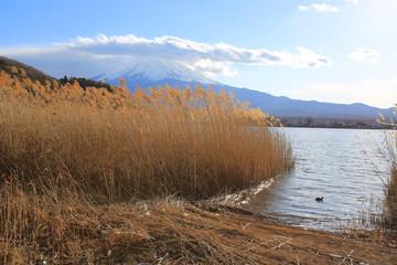 landsscape of mount fuji