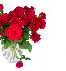 Red blooming roses