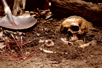 Skull and bones digged from pit in the scary graveyard