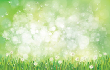 Vector spring  nature  background,  dandelions field on green bokeh background.