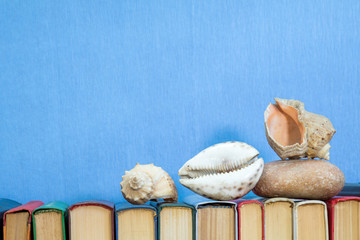 Sea shells and stones on multicolored books at light blue background. Education concept. Copy space