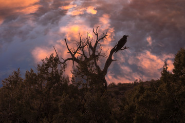 Silhouette of a crow and tree with a brilliant sunset