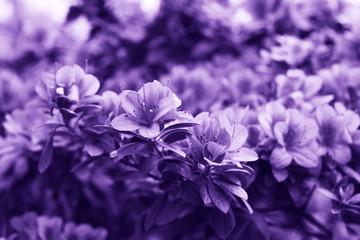 Kwiaty w kolorze ultra fioletowym.