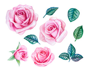 Set of pink roses with leaves isolated on white background. Templates. Watercolor. Illustration. Handmade