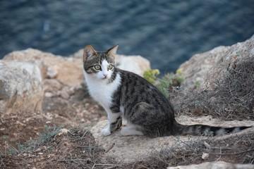 Leuchtturmmieze – junge Katze am Cap de Barbaria auf Formentera