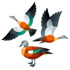 Stylized Birds - South African Shelduck