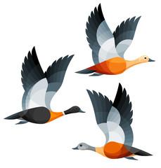 Stylized Birds - Ruddy, Australian and South African Shelducks in flight