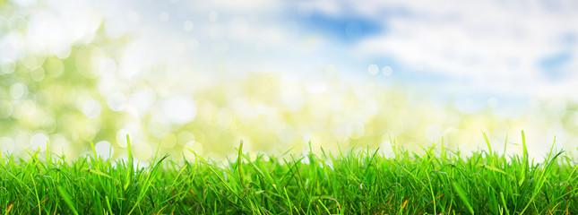 ładna natura tła