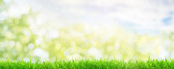 Frühlingshintergrund Wiese Bokh