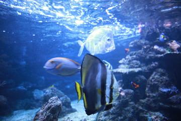 Colorful fishes in the aquarium