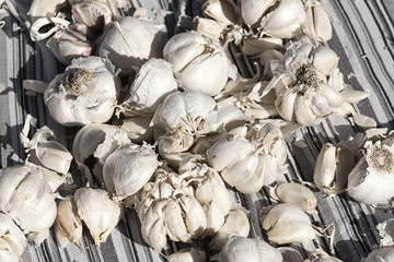 Lots of Garlic on a Blanket