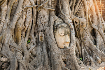 Famous Buddha Head with Banyan Tree Root at Buddhist temple Wat Mahathat Temple in Ayuthaya Historical Park, UNESCO world heritage site, Thailand.