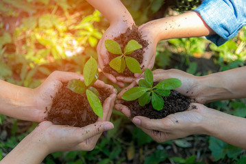 Hands People Team Work family Cupping  young Plant Nurture Environmental and reduce global warming earth.  Ecology Concept.