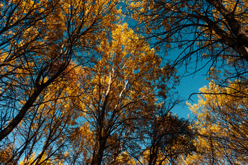Foto op Canvas Aan het plafond autumn forest against the blue sky