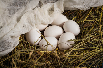 Eggs in the Nest of straw covered with gauze. Farm Concept