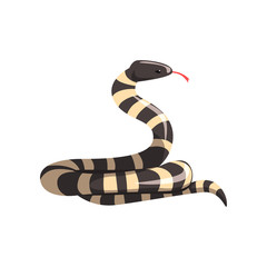 California king snake with black and white bands. Cartoon large reptile with tongue out. Colorful wild serpent. Non-venomous creature. Flat vector design