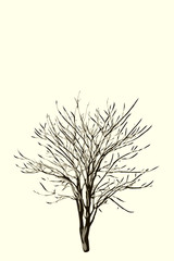 vector illustration of dead tree made in hand drawn style. Line hand sketched artwork. Halloween concept