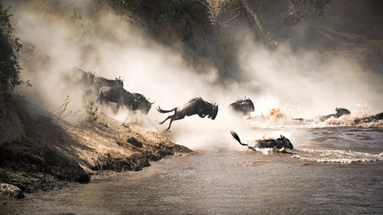 Wildebeest leap of faith into the Mara River Fototapete
