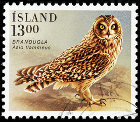 Short-eared owl stamp