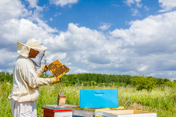 Apiarist, beekeeper is holding honeycomb with bees