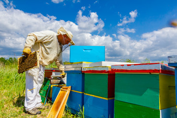 Apiarist, beekeeper is checking bees on honeycomb wooden frame