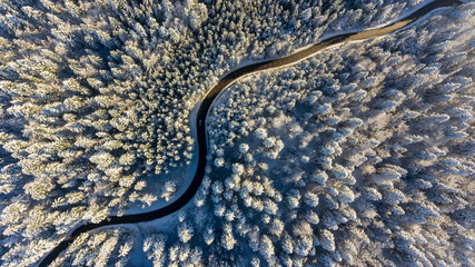 Winding road through a winter forest.