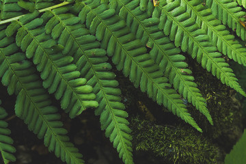 close up fern leaf in morning forest with center from top view background
