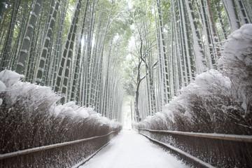 京都嵐山竹林の雪景色