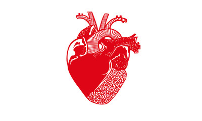 Red heart organ