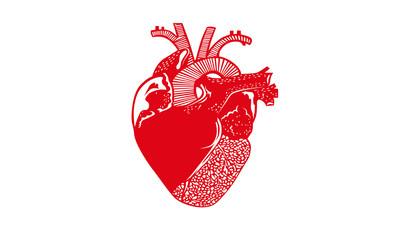 Red heart organ