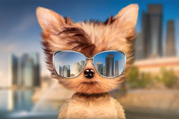 Dog in sunglasses stand in front travel background
