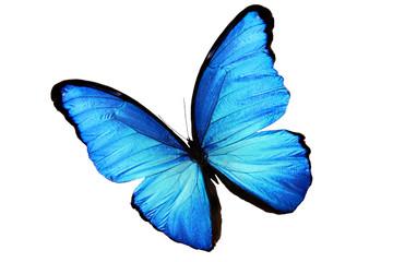 Большая голубая морфо бабочка изолирована на белом фоне