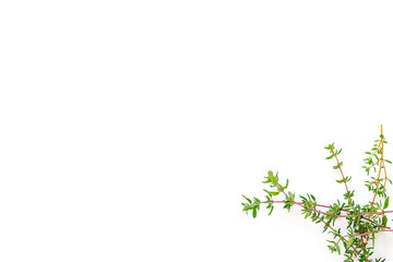 Fresh branches with leaves of organic thyme seen from above isolated on a white background. Horizontal composition. Top view